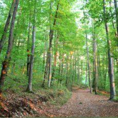 Umweltschutz wird in Österreich inzwischen mit Füßen getreten